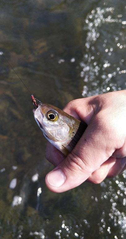 fish3-1.jpg