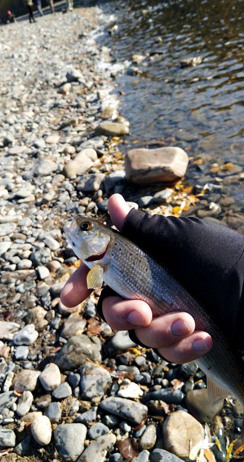 fish4-19.jpg